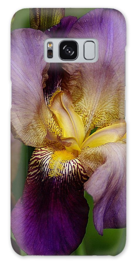 Flowers Galaxy S8 Case featuring the photograph Iris Beauty by Ben Upham III
