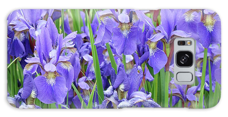 �irises Artwork� Galaxy S8 Case featuring the photograph Iris Flowers Artwork Purple Irises 9 Botanical Garden Floral Art Baslee Troutman by Baslee Troutman