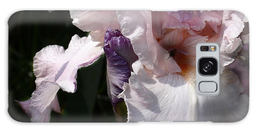 Flower Galaxy Case featuring the photograph Iris Lace by Steve Karol