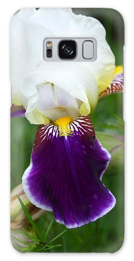 Flower Galaxy S8 Case featuring the photograph Iris by Paul Slebodnick