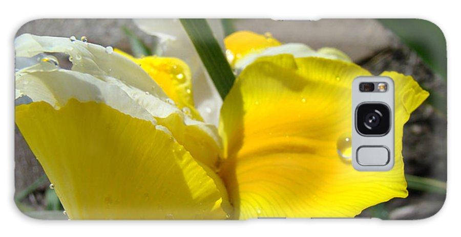 �irises Artwork� Galaxy S8 Case featuring the photograph Irises Artwork Iris Flowers Art Prints Flower Rain Drops Floral Botanical Art Baslee Troutman by Baslee Troutman
