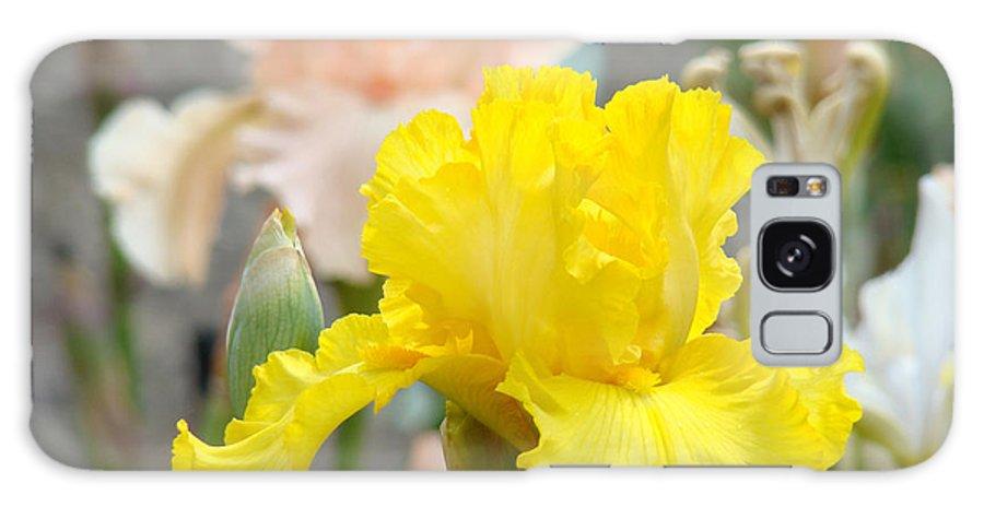 �irises Artwork� Galaxy S8 Case featuring the photograph Irises Botanical Garden Yellow Iris Flowers Giclee Art Prints Baslee Troutman by Baslee Troutman