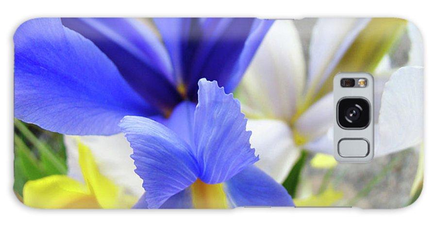 �irises Artwork� Galaxy Case featuring the photograph Irises Flowers Artwork Blue Purple Iris Flowers 1 Botanical Floral Garden Baslee Troutman by Baslee Troutman