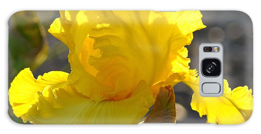 Iris Galaxy S8 Case featuring the photograph Irises Yellow Iris Flowers Art Prints Floral Canvas Baslee Troutman by Baslee Troutman