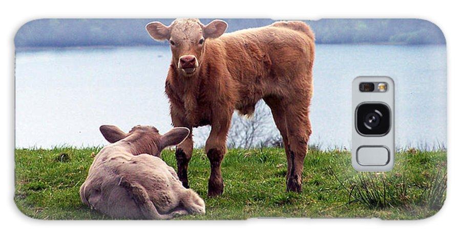 Ireland Galaxy S8 Case featuring the photograph Irish Calves At Lough Eske by Teresa Mucha