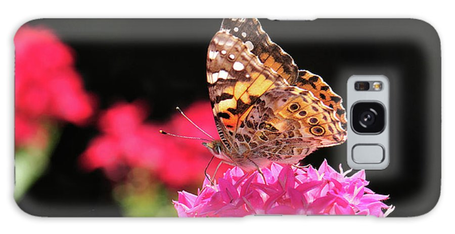 Butterfly Galaxy S8 Case featuring the photograph Irredescent by Betty LaRue