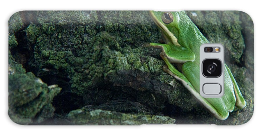 Frog Galaxy S8 Case featuring the photograph Its Hard To Be Green by Douglas Barnett