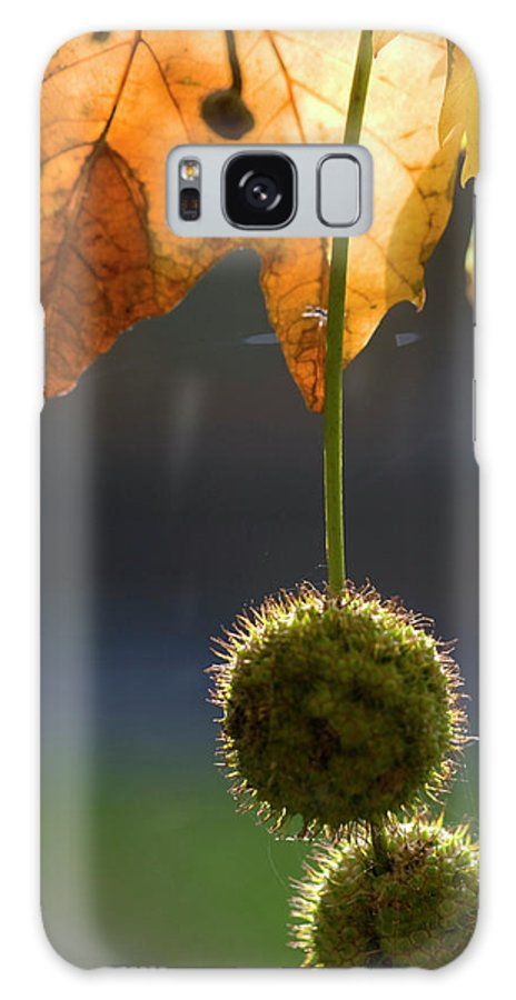 Pods Galaxy S8 Case featuring the photograph Ivy Pods by Carl Purcell