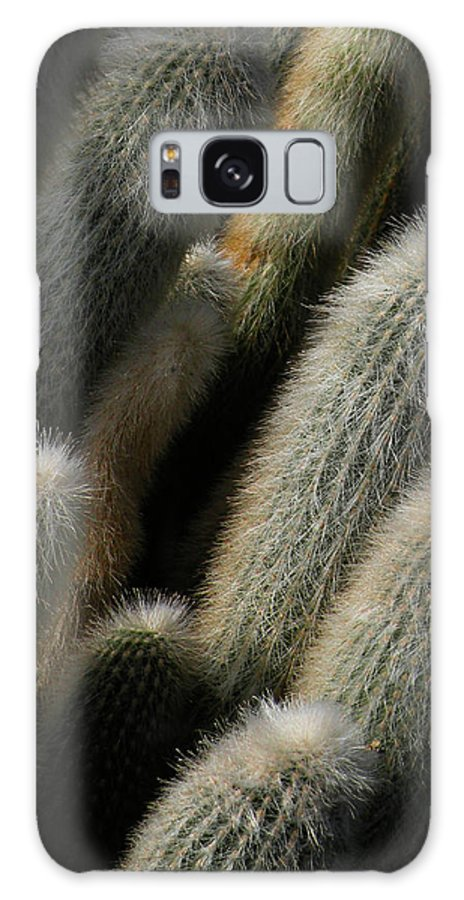 Cactus Galaxy S8 Case featuring the photograph J-roll by Trish Tritz