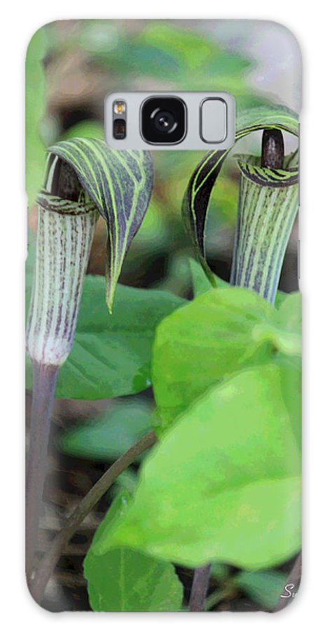 Jack In The Pulpit Galaxy S8 Case featuring the photograph Jack In The Pulpit Enhanced by Suzanne Gaff