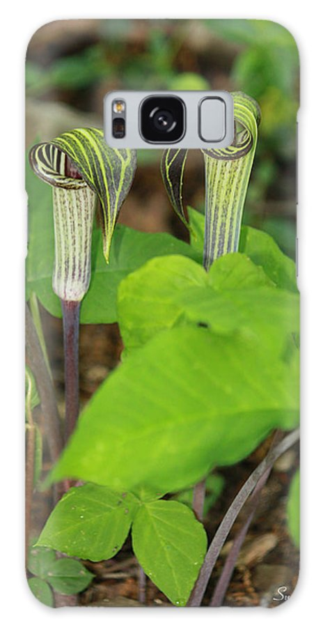 Jack In The Pulpit Galaxy S8 Case featuring the photograph Jack In The Pulpit by Suzanne Gaff