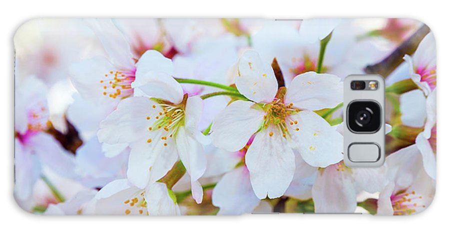 Cherry Blossom Festival Galaxy S8 Case featuring the photograph Japanese Cherry Tree Blossoms 2 by SR Green