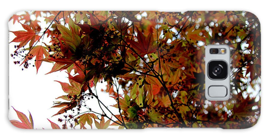 Nature Galaxy S8 Case featuring the photograph Japanese Maple 2011-1 by Robert Morin