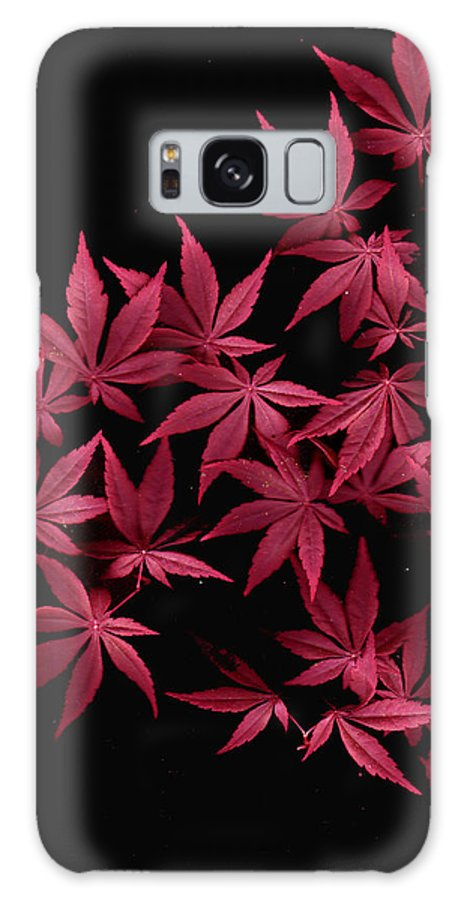Japanese Maple Galaxy S8 Case featuring the photograph Japanese Maple Leaves by Wayne Potrafka