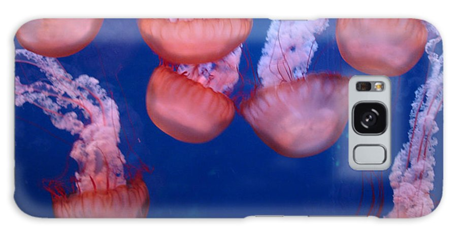 Photography Galaxy S8 Case featuring the photograph Jellies by Shelley Jones
