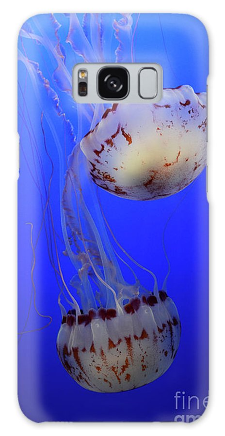 Jellyfish Galaxy S8 Case featuring the photograph Jellyfish 1 by Bob Christopher
