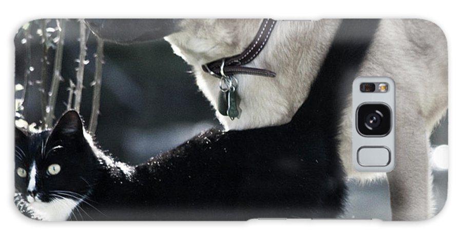 Dog And Cat Galaxy S8 Case featuring the photograph Journey by Betsy Knapp