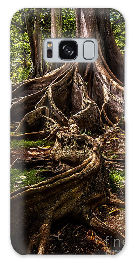 Hawaii Galaxy S8 Case featuring the photograph Jurassic Park Tree Trailing Root by Blake Webster