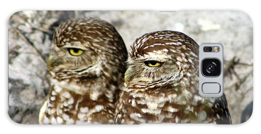 Burrowing Owls Galaxy S8 Case featuring the photograph Just Act Casual And Maybe No One Will Notice Us by Virginia Fred