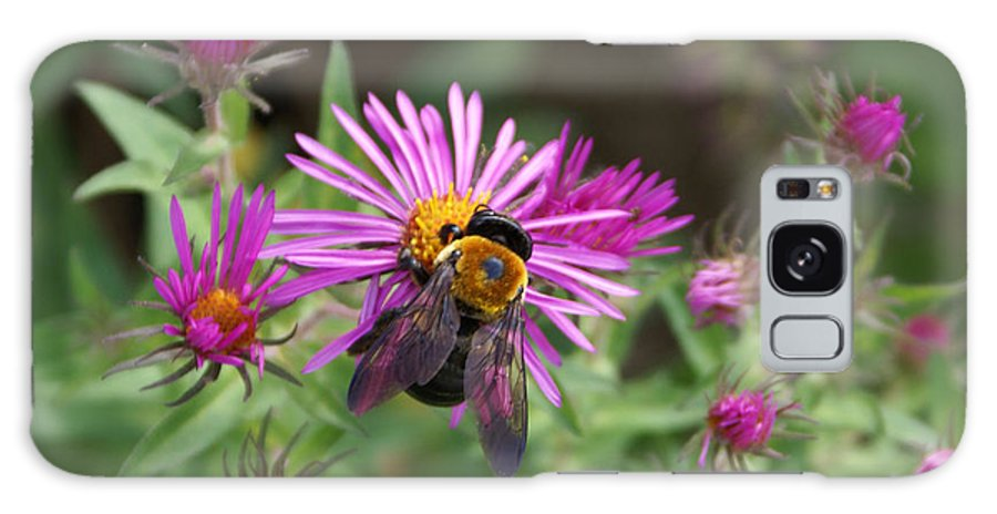 Bumble Bee Galaxy S8 Case featuring the photograph Just Beeing Debbie-may by Debbie May