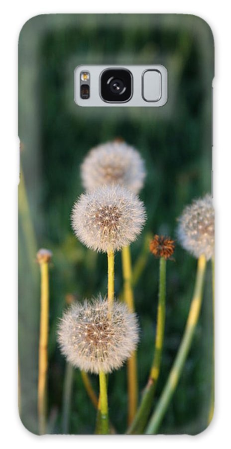 Dandilions Galaxy S8 Case featuring the photograph Just Dandi by JoJo Photography
