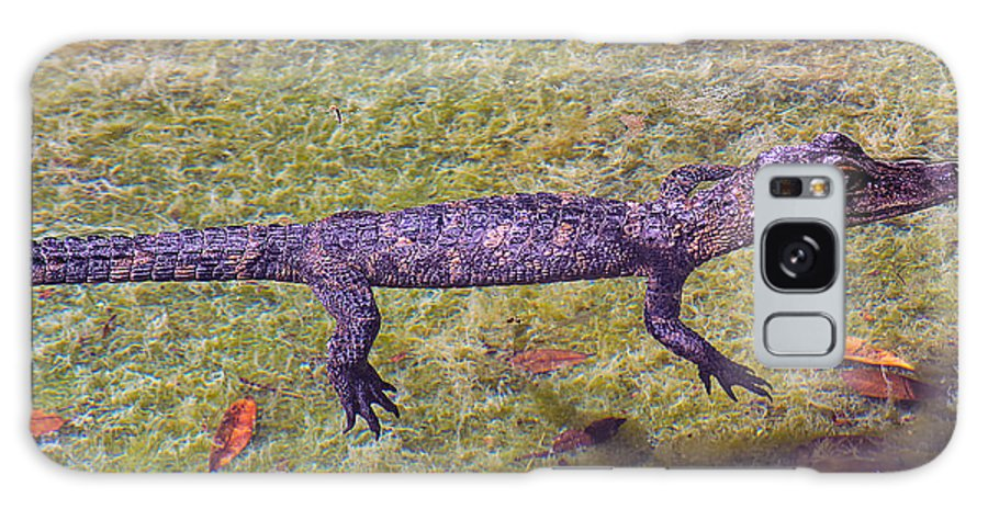 Alligator Galaxy S8 Case featuring the photograph Just Drifting Along by Kenneth Albin