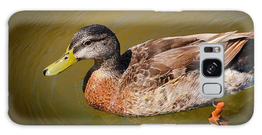 Duck Galaxy S8 Case featuring the photograph Just Ducky by Pamela Blizzard