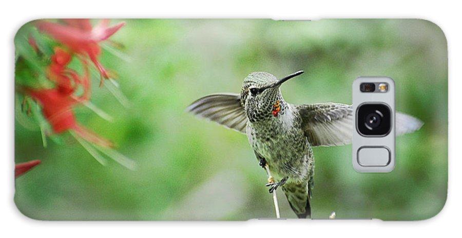Hummingbird Galaxy S8 Case featuring the photograph Just Hummin' Along by Saija Lehtonen