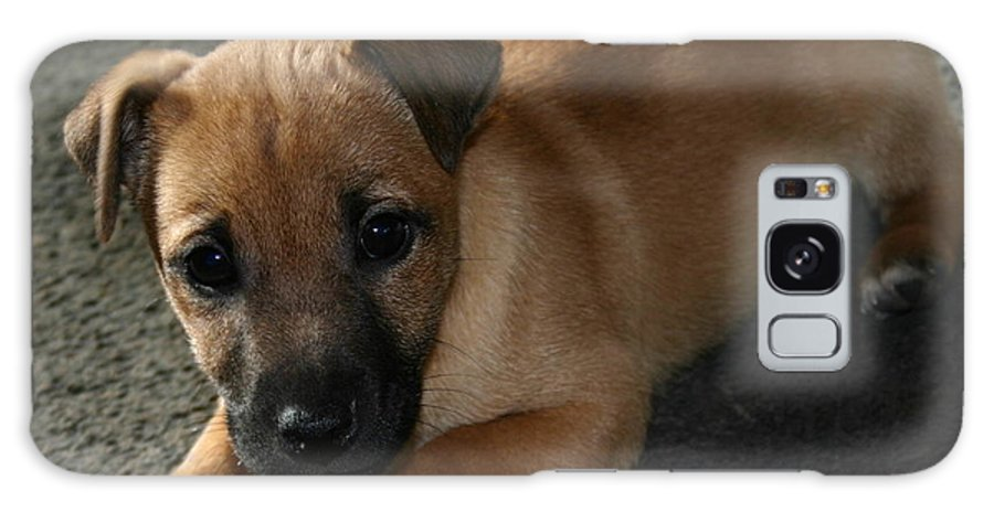 Dog Galaxy S8 Case featuring the photograph Just Joey by Martina Fagan