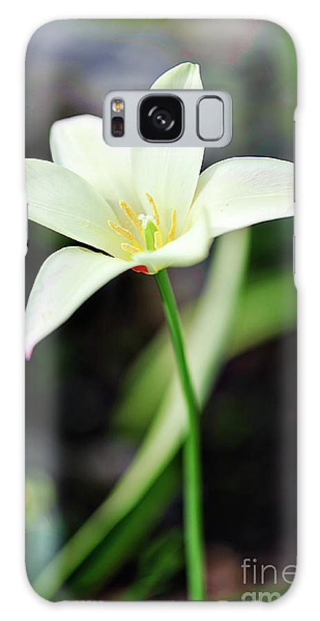Botanical Galaxy S8 Case featuring the photograph K I S S by Charles Dobbs