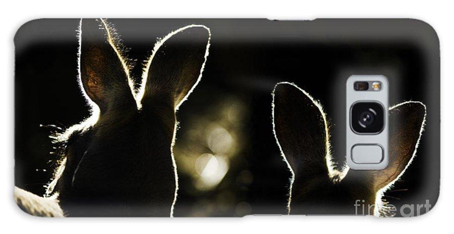 Kangaroo Galaxy Case featuring the photograph Kangaroos Backlit by Sheila Smart Fine Art Photography