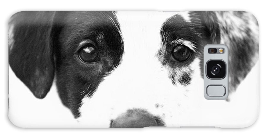 Dogs Galaxy S8 Case featuring the photograph Karma by Amanda Barcon