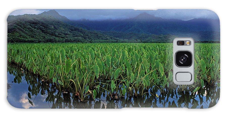 Hawaii Galaxy S8 Case featuring the photograph Kauai Taro Field by Kathy Yates