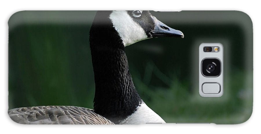 Goose Galaxy S8 Case featuring the photograph Keeping Watch by Mark Wiley