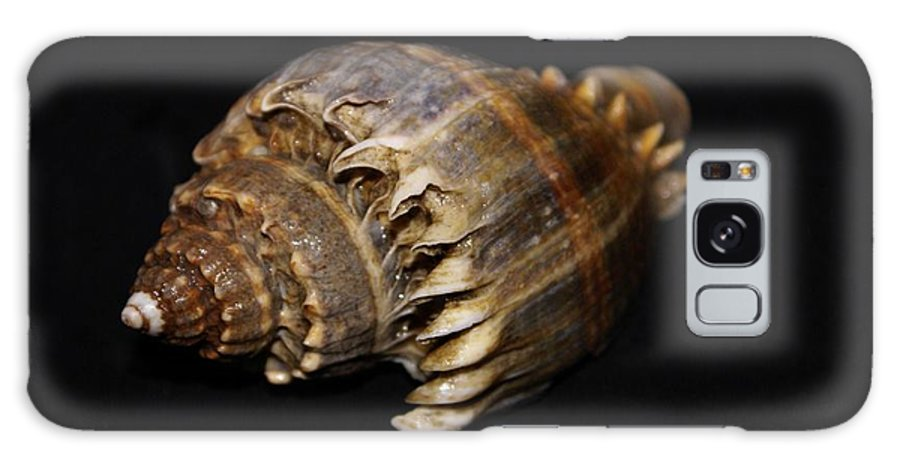 Shells Galaxy S8 Case featuring the photograph King Conch - Photosbydm by Debbie May