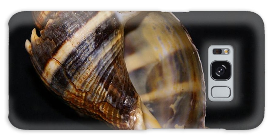 Shells Galaxy S8 Case featuring the photograph King Conch 3 - Photosbydm by Debbie May