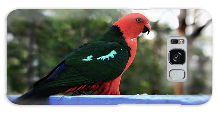 King Parrot Galaxy S8 Case featuring the photograph King Of The Parrots by Douglas Barnard