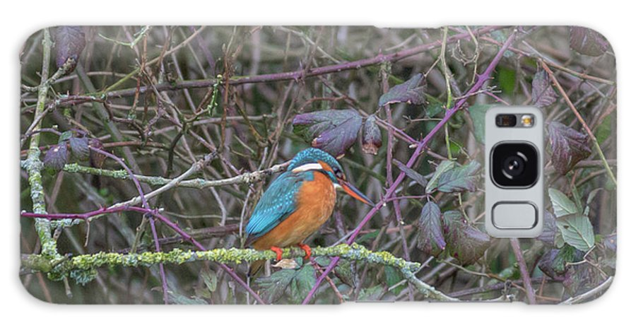 Kingfisher Galaxy S8 Case featuring the photograph Kingfisher. by Angela Aird