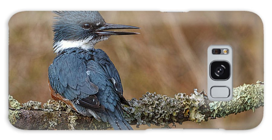 Bombay Hook Nwr Galaxy S8 Case featuring the photograph Kingfisher by Thru Kurts Lens