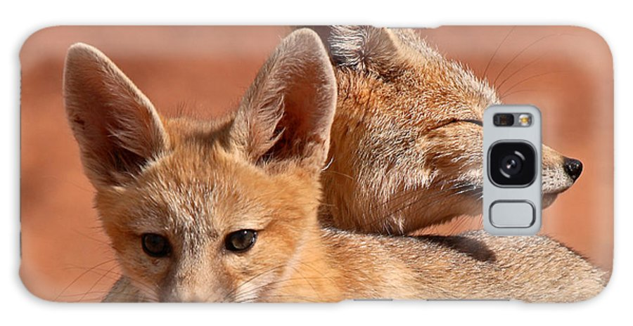 Fox Galaxy Case featuring the photograph Kit Fox Pup Snuggling With Mother by Max Allen