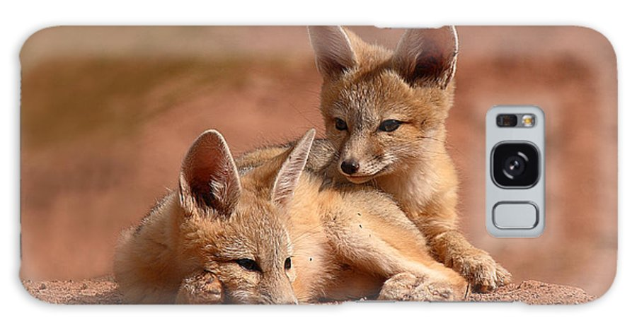 Fox Galaxy Case featuring the photograph Kit Fox Pups On A Lazy Day by Max Allen