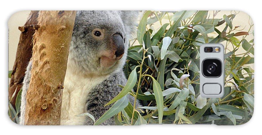 Koala Bear Galaxy S8 Case featuring the photograph Koala Bear I by Keith Lovejoy