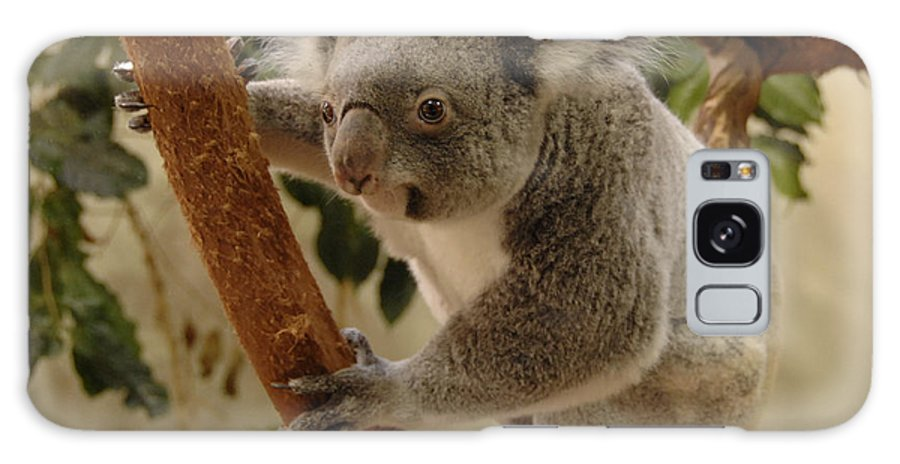 Koala Bear Galaxy S8 Case featuring the photograph Koala Bear II by Keith Lovejoy