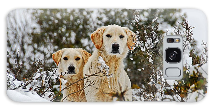 Dog Galaxy S8 Case featuring the photograph Labrador's In Snow by Avi Hirschfield