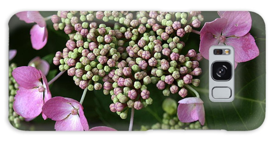 Flower Galaxy Case featuring the photograph Lacecap Hydrangea Macro by Anna Lisa Yoder