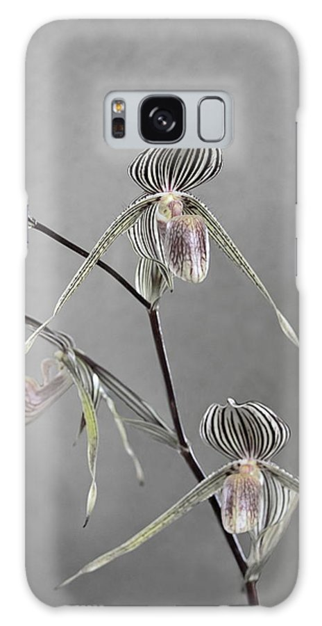 Lady Galaxy S8 Case featuring the photograph Lady Slipper Orchid by Viktor Savchenko