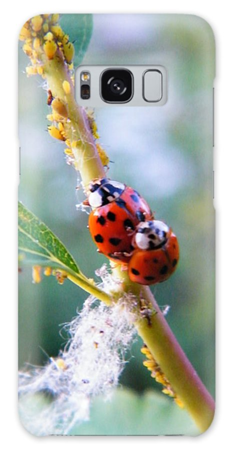 Insect Galaxy S8 Case featuring the photograph Ladybug Beetles Mating Near Aphids  Spring  Indiana by Rory Cubel