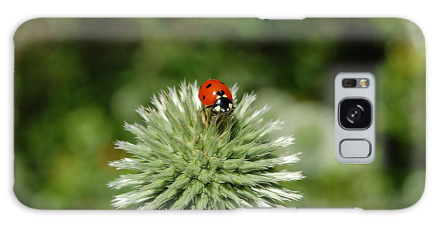 Ladybug Galaxy S8 Case featuring the photograph Ladybug by Jean Booth