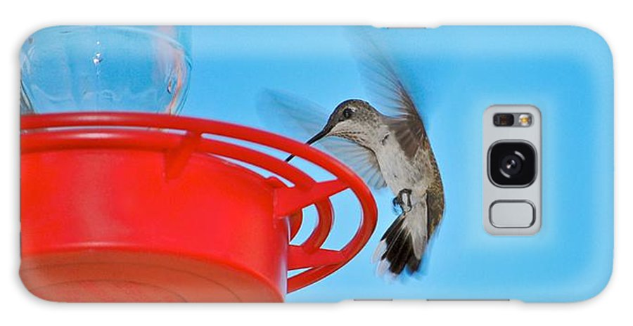 Hummingbirds Galaxy S8 Case featuring the photograph Landing by Donna Shahan