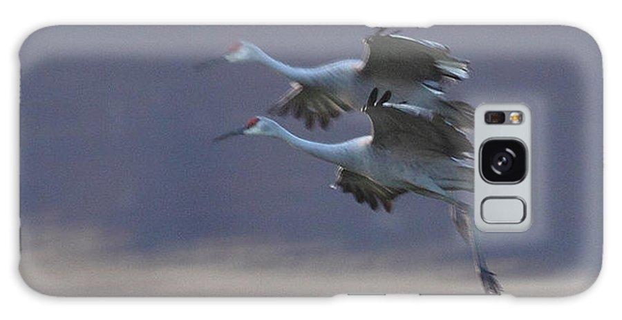 Sandhill Cranes Birds Photography Photograph Wildlife Flying Flight Galaxy S8 Case featuring the photograph Landing Gear Down by Shari Jardina